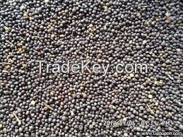 High  quality  Rape Seeds