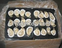 High quality  Frozen Oyster    for  sale