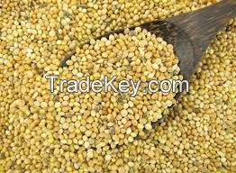 High quality Millet Grains