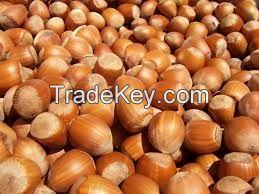 High quality Hazelnut
