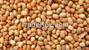 Brown Eyed Beans