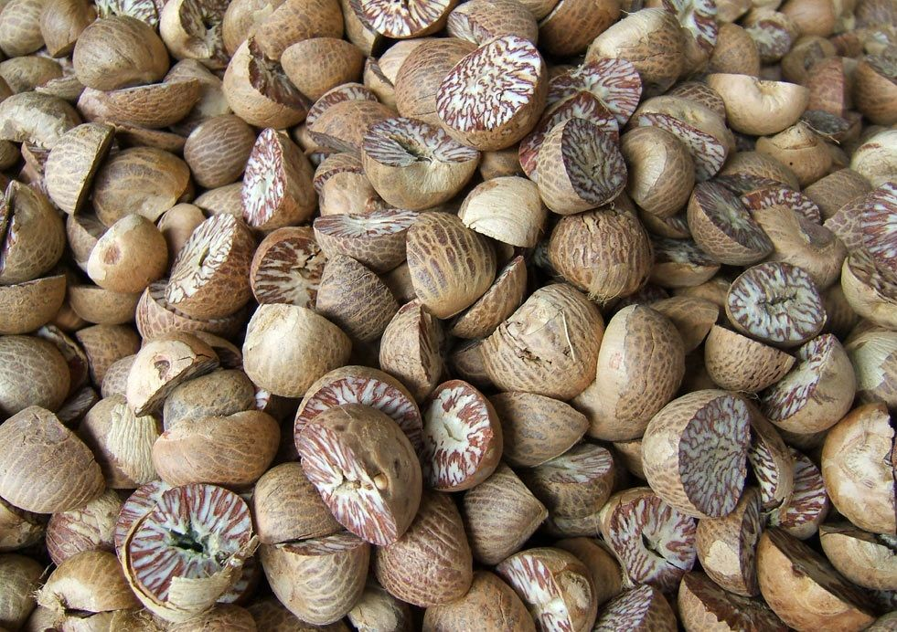 Dried Slice And Whole Betel Nuts 70%-75%