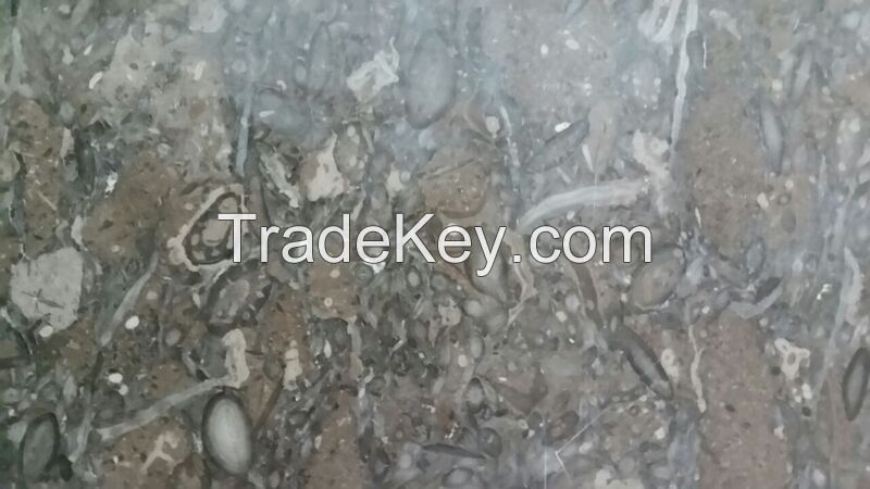 Fossil Brown Limestone pakistan marble