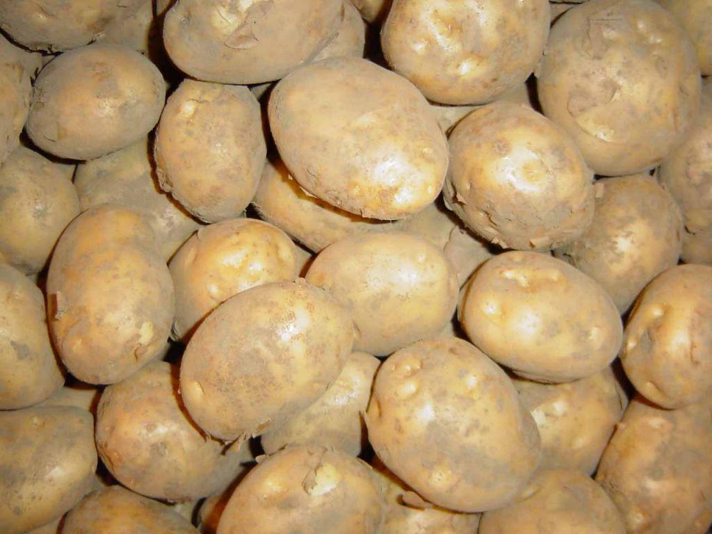 Good Quality Fresh Potatoes