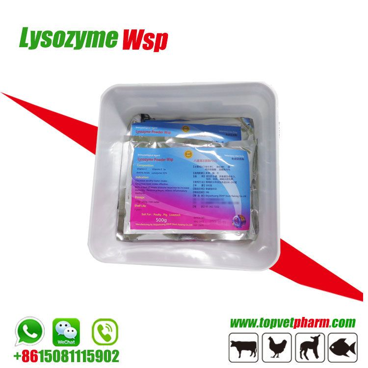 Anti-inflammatory Nutrition Supplement Enzyme Lysozyme Powder