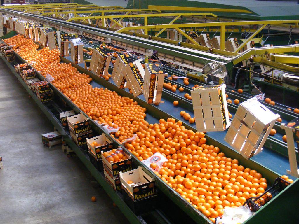 citrus fruit,cherry,grape,tomato,cucumber,pepper,pomegranate,fig,peach.pear,apricot