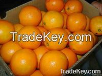 Valencia and Navel Fresh Oranges very Very Cheap