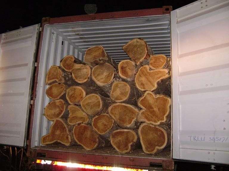 Timber, Round logs timber,Kosso / Rose wood, Mahogany, Gmelina,Mouabi, Niove, Okan, Okoume