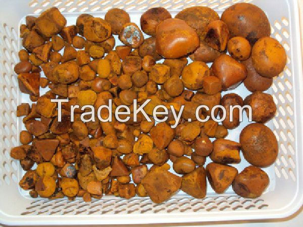 Cow Gallstones