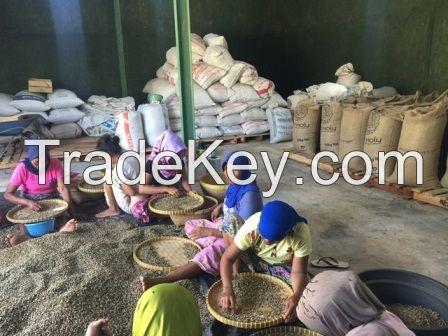 018 Robusta Coffee Bean  from lombok Island