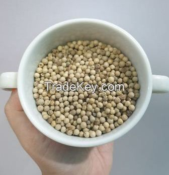 012 White pepper as spices in whole and powder Bakula