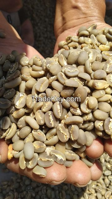 028 New Crop June 2020 Arabica Coffee Bean origin Java Island