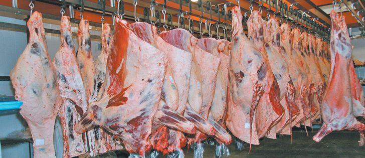Fresh Beef carcass