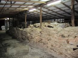 HIGH QUALITY WET SALTED COW AND CALF SKIN FOR SALE
