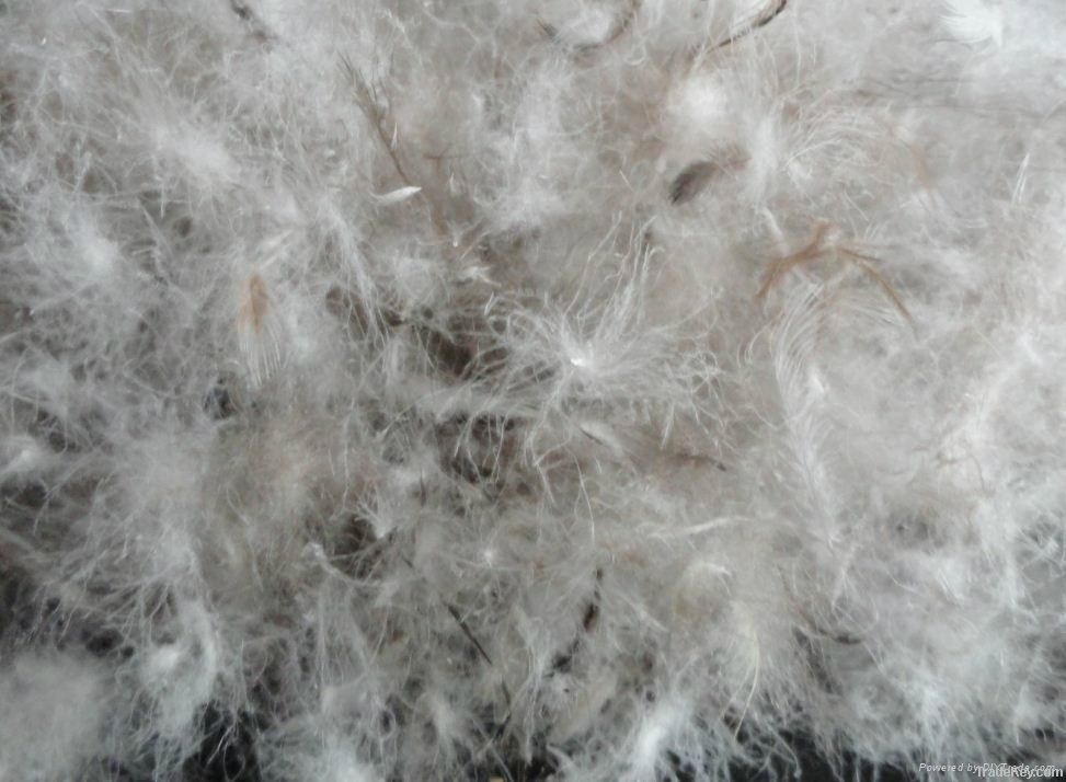 Wholesale washed grey duck down and feather
