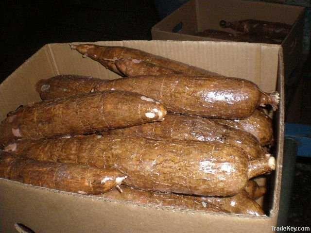 Cassava (Dried and fresh, Starch, Tapioca starch)