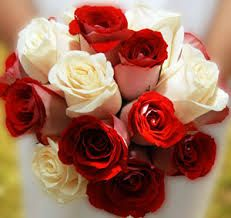 Contact Now   Fresh Cut flowers, roses, fillers