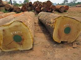 Timber logs,sawn timber.