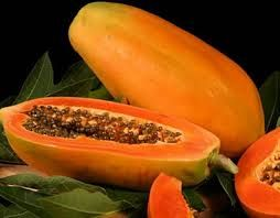 Good Quality Fresh Papaya