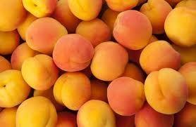 Quality Fresh Apricots