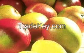 Variety of Fresh Mangoes