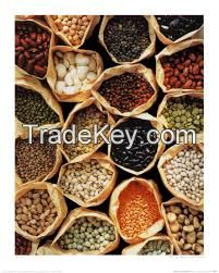 Cheap wholesale health food preserved salty canned baked beans in tomato sauce