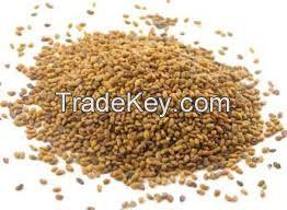 grass seeds alfalfa seeds for planting