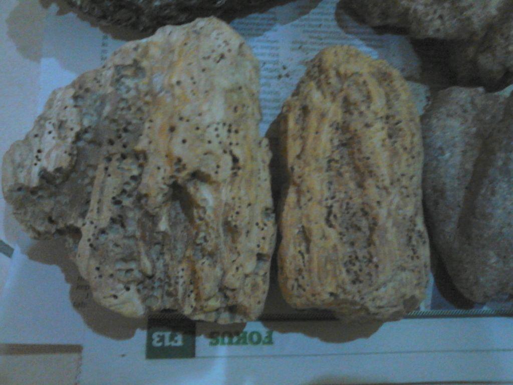 Ambergris,Anbar,whale vomit