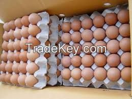 Fresh Chicken Eggs / Fresh white and brown table eggs