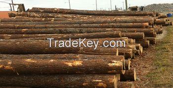 radiate pine logs yellow pine wood logs