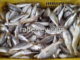 QUALITY WET SALTED ANIMAL HIDES FOR SALE