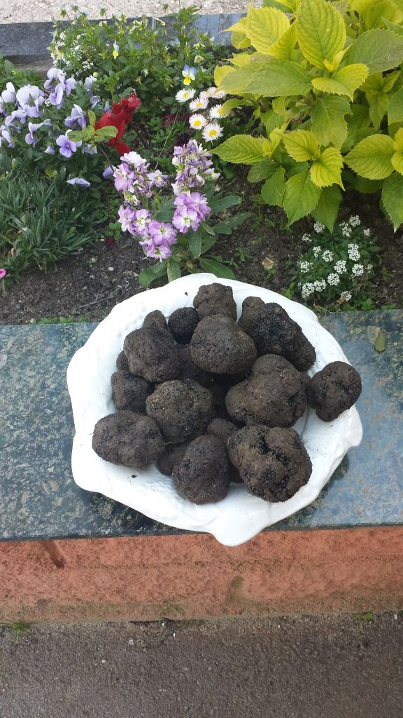 Fresh Black Truffle selected HIGH QUALITY by KING TRUFFLE