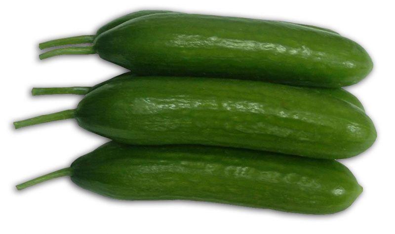 fresh cucumber, cucumber