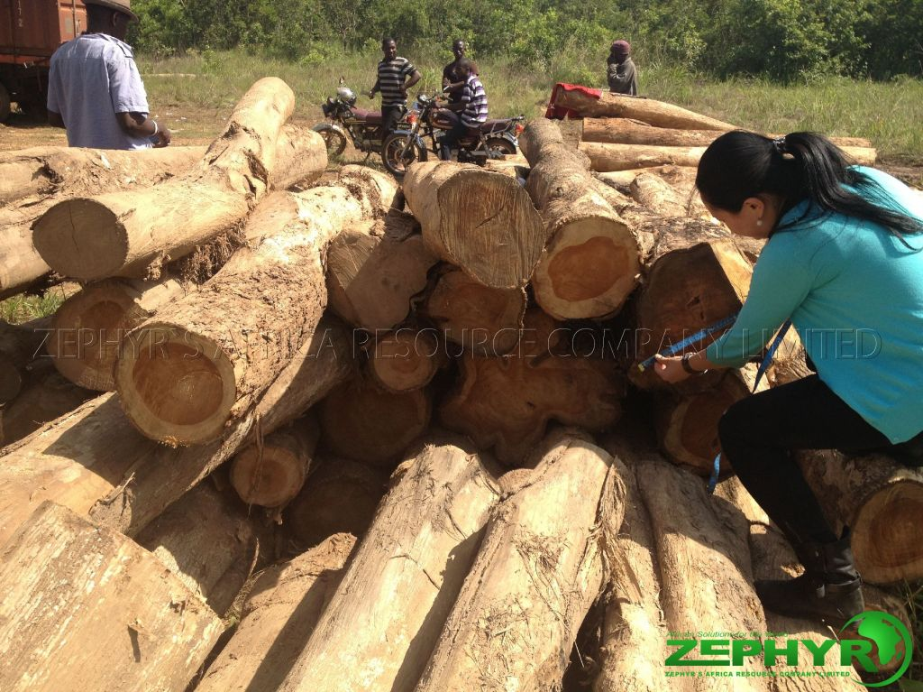 [Zephyr Global] African Wood exporter from Ghana, looking for importers