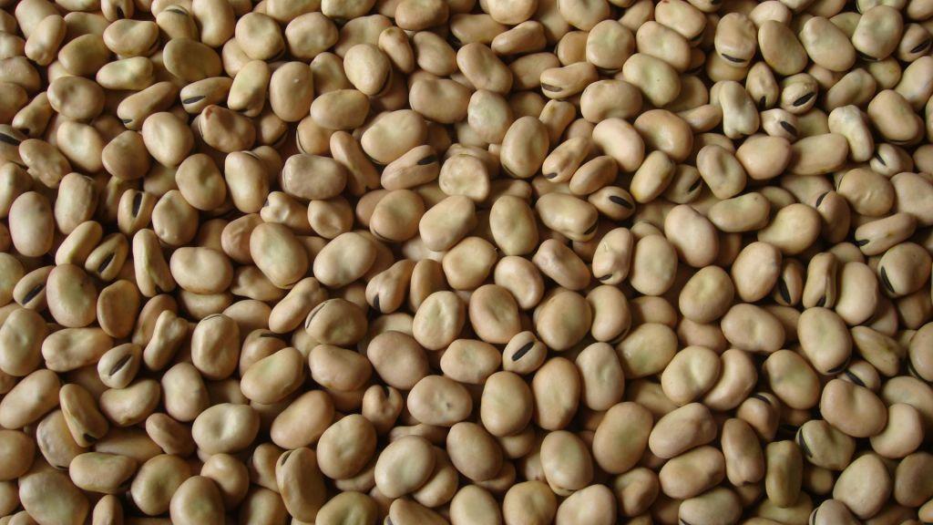 Zhangjiakou Broad Beans