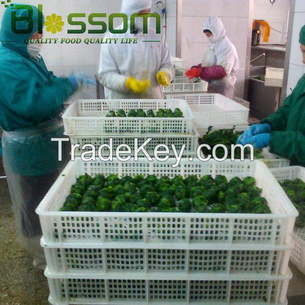 Supply frozen vegetable IQF spinach frozen spinach