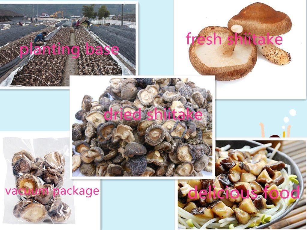 Nutritious shiitake mushroom/dried mushrooms/dried flower mushroom