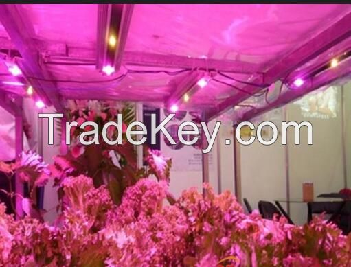 Leds Horticulture 20Watt Hps Grow Kit Oyster Mushrooms/Botanical Garden Panel Grow Lights 28W /36w/72W LED Grow  lights