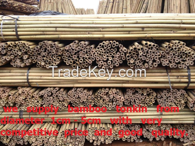 Bamboo tonkin