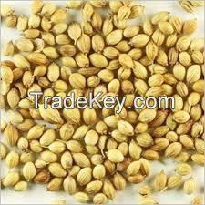 Corriander Seed Fennel Seed CHILLI ANNATTO SEEDS,ONION,seeds