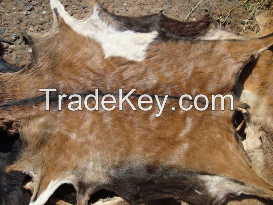 Dry and Wet Salted Goat and Sheep Skin, Wet salted Donkey / Cow Skin and Cow Hides and Other Animal Skin Avalaible