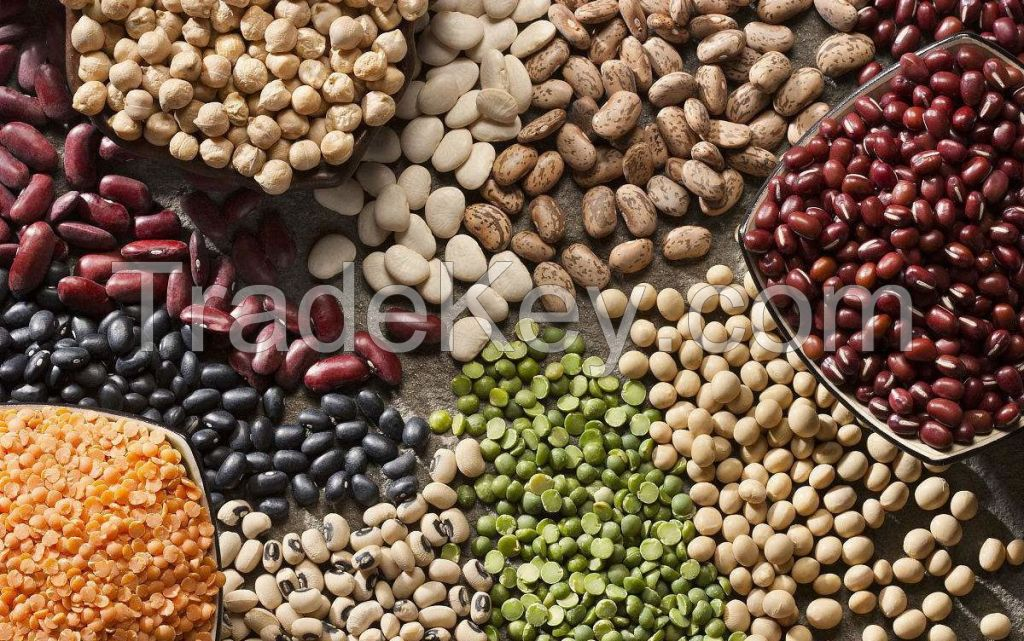 WHITE AND RED KIDNEY BEAN