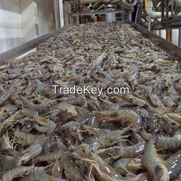 Frozen Crystal Red Shrimp/ Frozen Black Tiger Shrimp at PERFECT QUALITY