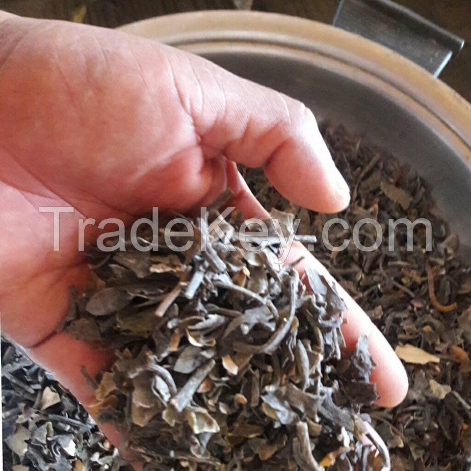 seaweed macrocystis   pyrifera /integrifolia