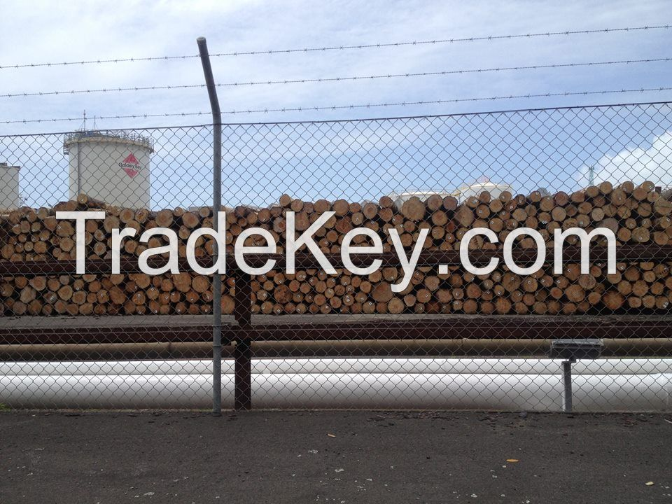 radiata pine logs for sale