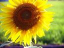 Grape seed oil/sunflower oil/sweet almond oil/corn oil