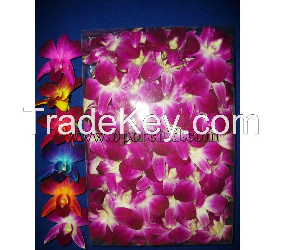 Orchid Cut Flower