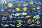 Live Marine Aquarium Supplier