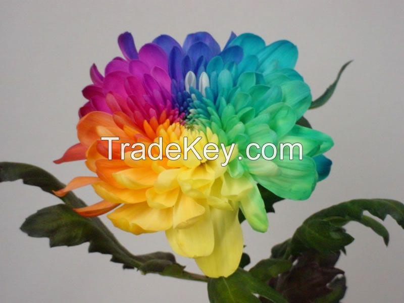 Dutch cut flowers