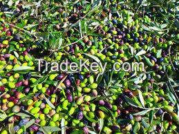 Oil Of Olive, extra vergin, from the Dop origin  zones of viannos, Crete, greece